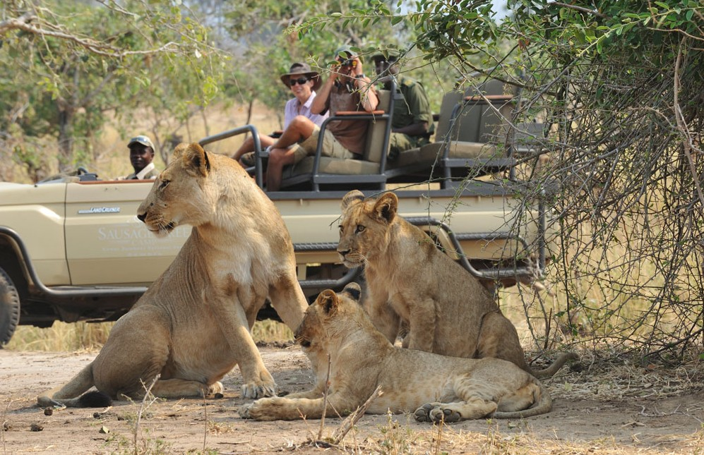 Quality safari experiences